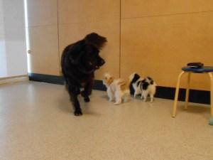 Max, Sadie & Sophia
