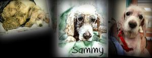 Sammy then