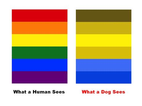 Colours Dogs Can See Best