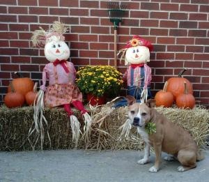 Josey on Halloween