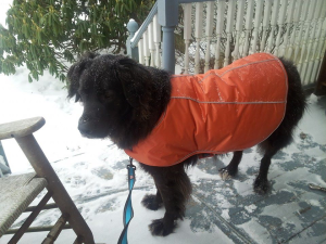 Ready for a walk in the snow!