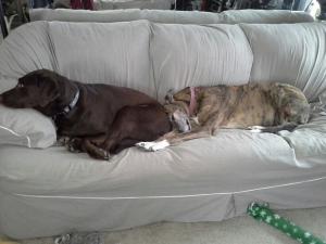 Cabrini snuggling Autumn's butt...Cousin love!.