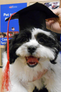 I graduated Puppy Class!