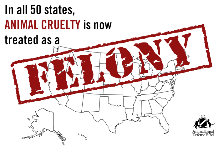 Friday Fact – Animal Abuse is Now a Felony in all 50 States |  MyPositiveDogTrainingBlog