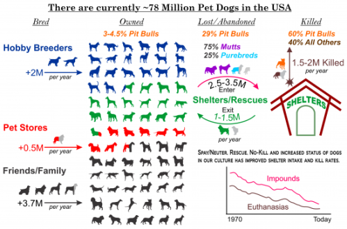 USA_Dogs_sources_destination_shelter_killed-550x364