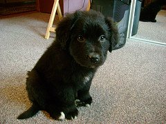 Max puppy pic