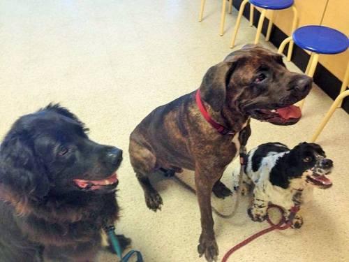 Max, Bones and Nico