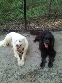 Luna and Max 1