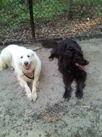 Luna and Max 2