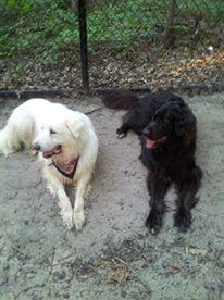Luna and Max 3
