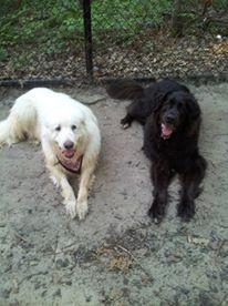 Luna and Max 4